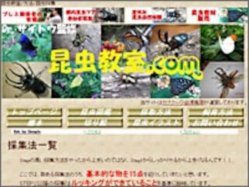 昆虫教室.com標本の時間