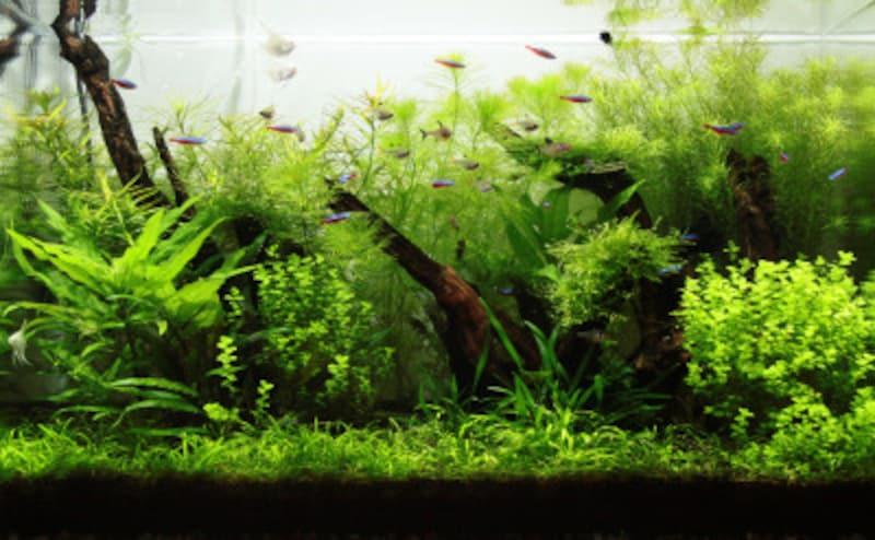 熱帯魚飼育での水合わせ