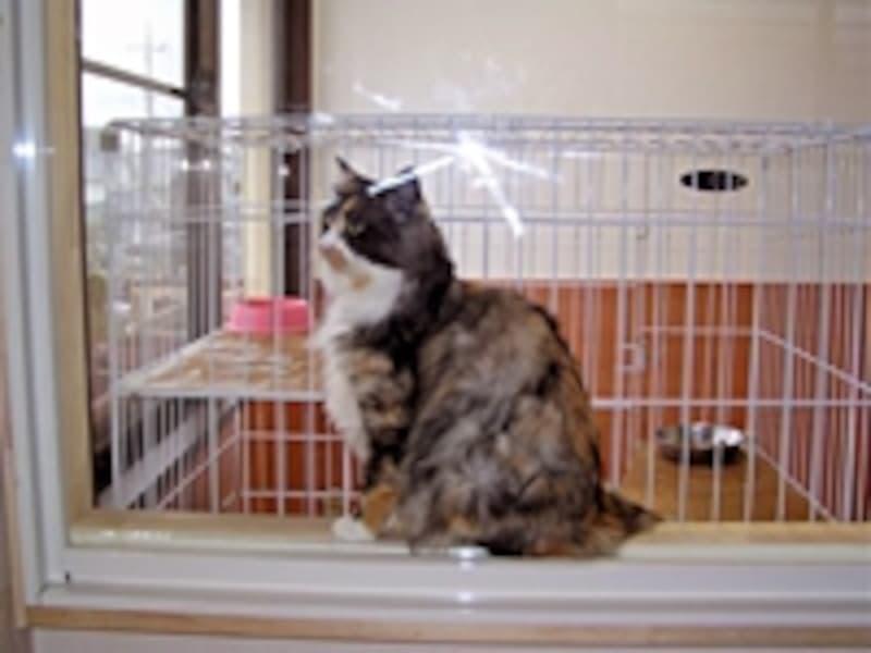 寝室から猫スペースを見た様子