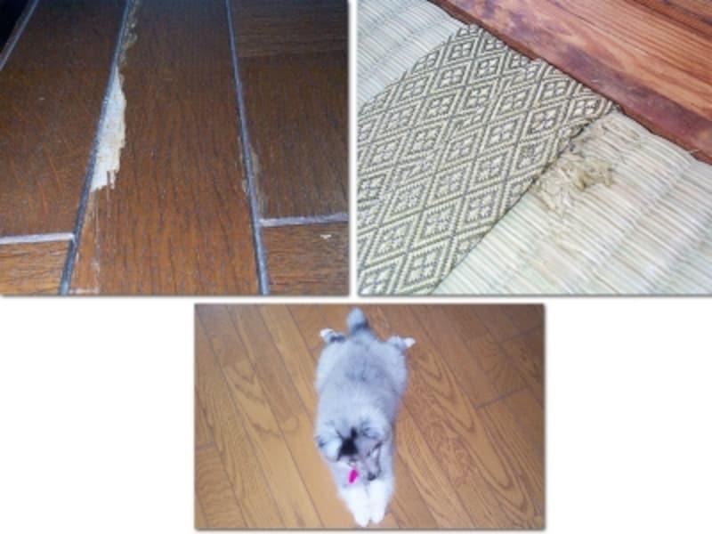 犬が壊した床