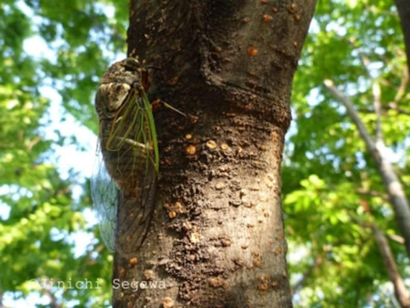 デジカメ昆虫植物採集