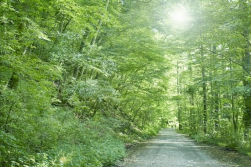 森林のアロマでクールダウン