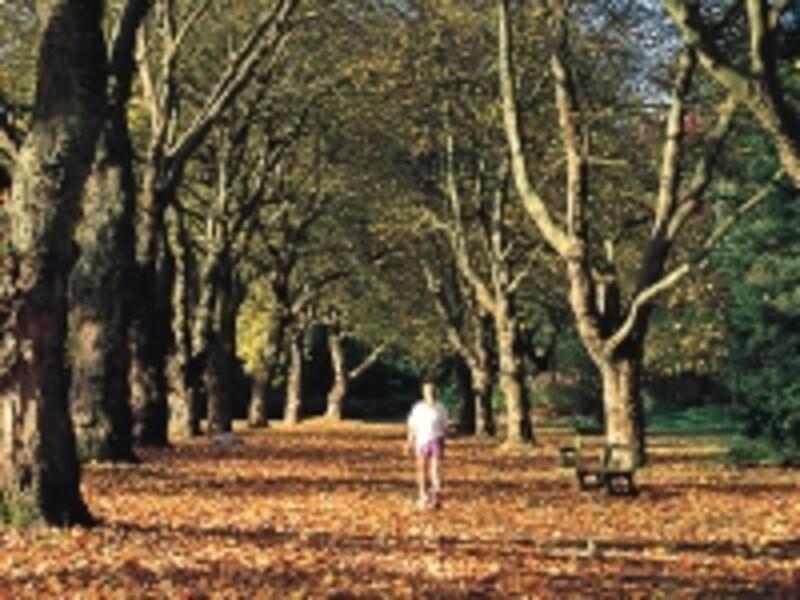 秋のバンクーバー。広葉樹は多いものの、紅葉よりも黄葉が中心undefined写真提供:TourismBC