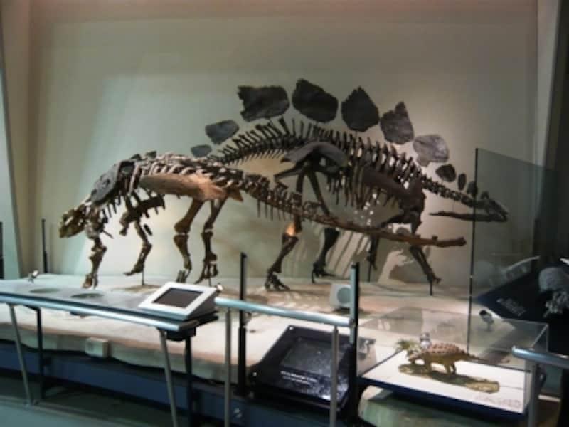 エウオプロケファルスとステゴサウルス
