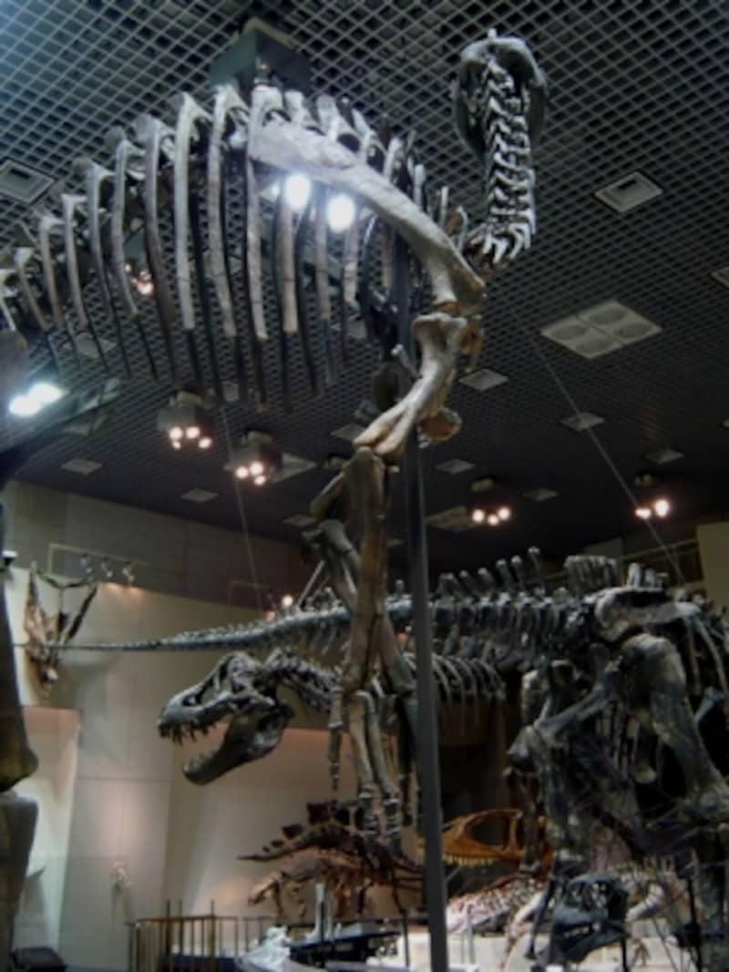 展示室の恐竜たちを色々な角度から見る