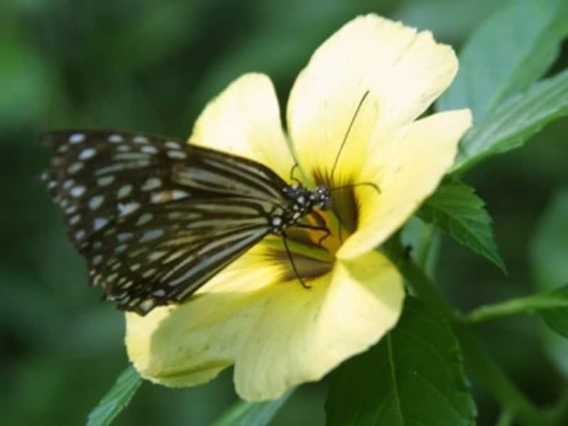 ハイキングでは、熱帯性気候の国ならではの珍しい動植物に出会えますundefined(c)マレーシア政府観光局
