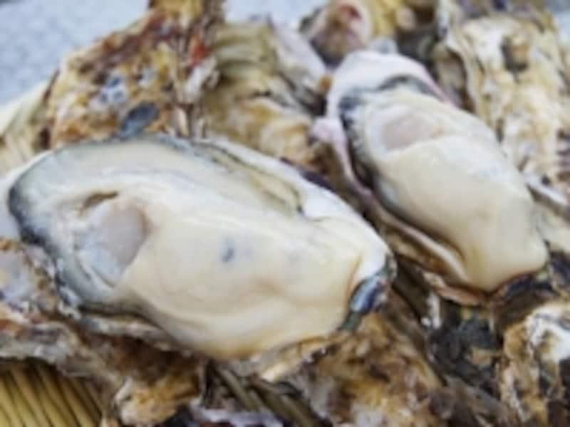 北海道の豊かな海に育まれた仙鳳趾(せんぽうし)の殻付生ガキ
