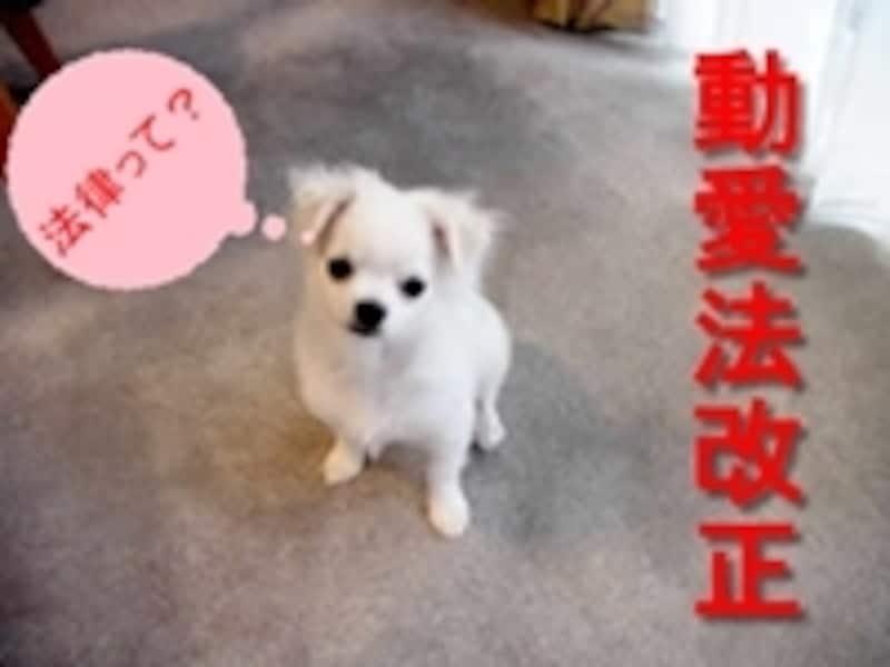 子犬の販売月齢の制限