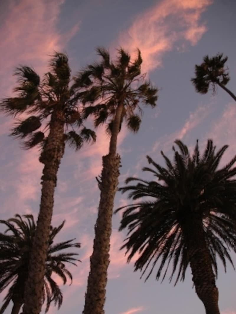 カリフォルニアといえば、パームツリーと青い空