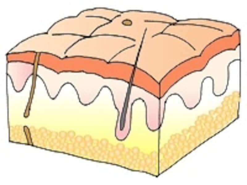お肌のターンオーバーは普段で約1か月