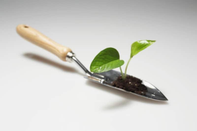 カブトムシを傷つけないよう根まわりはていねいに掘ろう