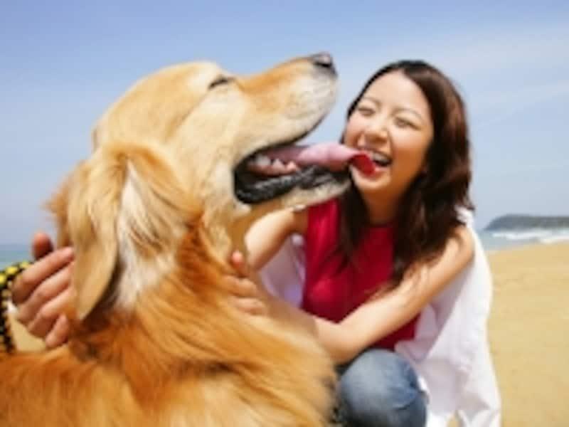 愛犬がもし他人を噛んでしまったら、飼い主はどうすべき?