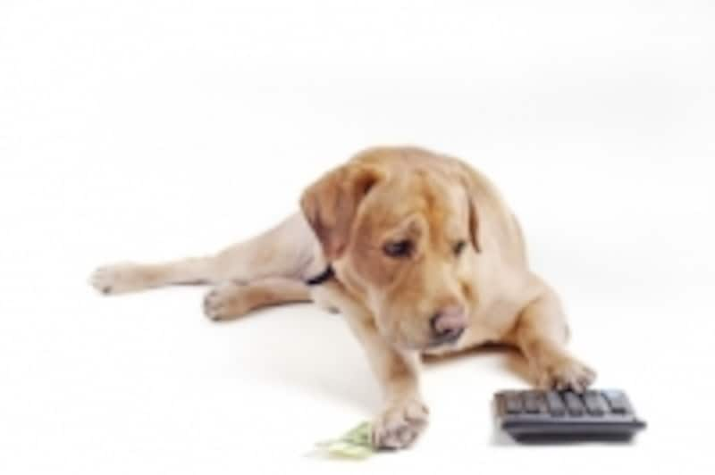 ペットには、ペット専用の保険を