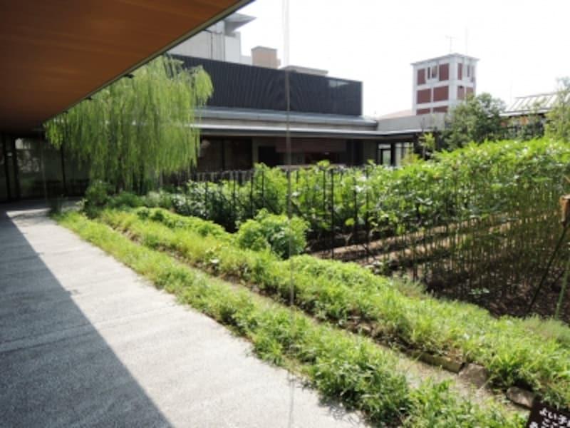 屋上の畑「八百一の郷undefined六角農場」