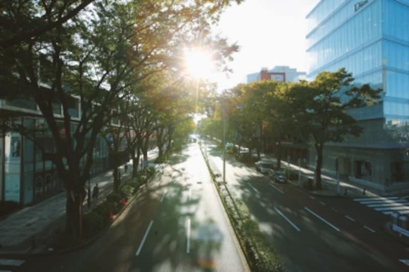 表参道(現地より約570m/2013年4月撮影)