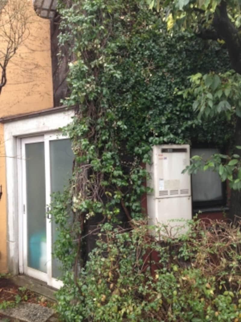 繊維質マットに植物をはわせる外壁