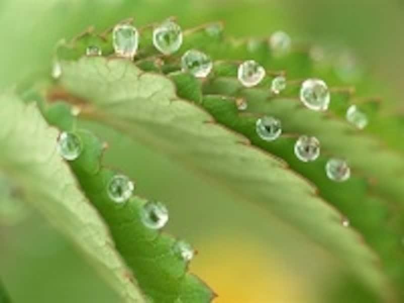ひとことで言えば…爽やかなグリーン系の香りです