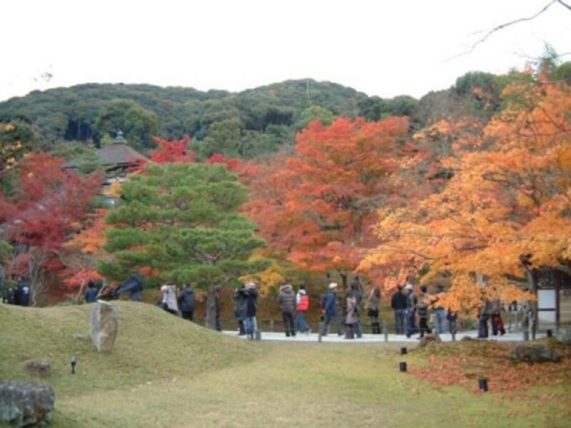 高台寺の紅葉・黄葉