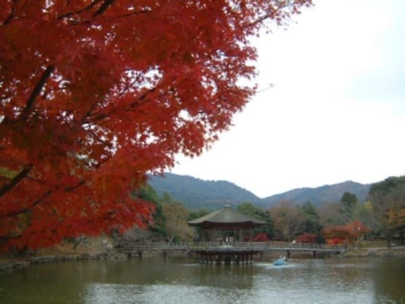 浮御堂の紅葉