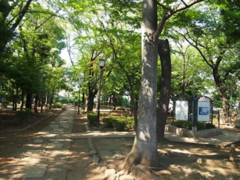 夏は桜の葉が木陰を作ってくれる。