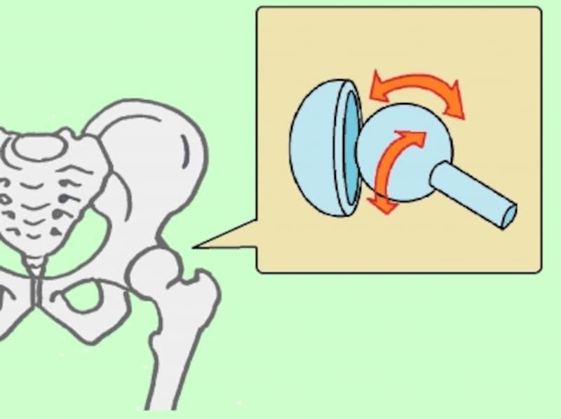 太ももと骨盤