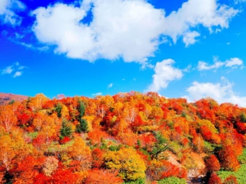 紅葉の八幡平