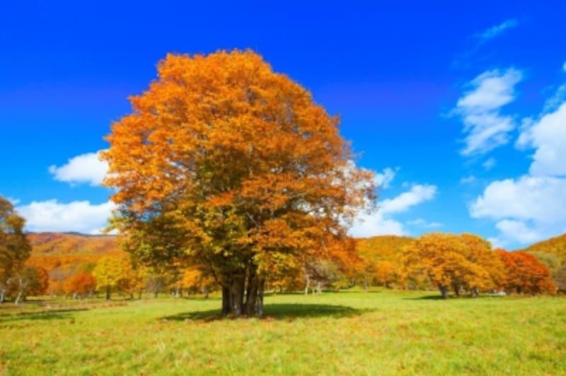 妙高笹ヶ峰牧場の紅葉