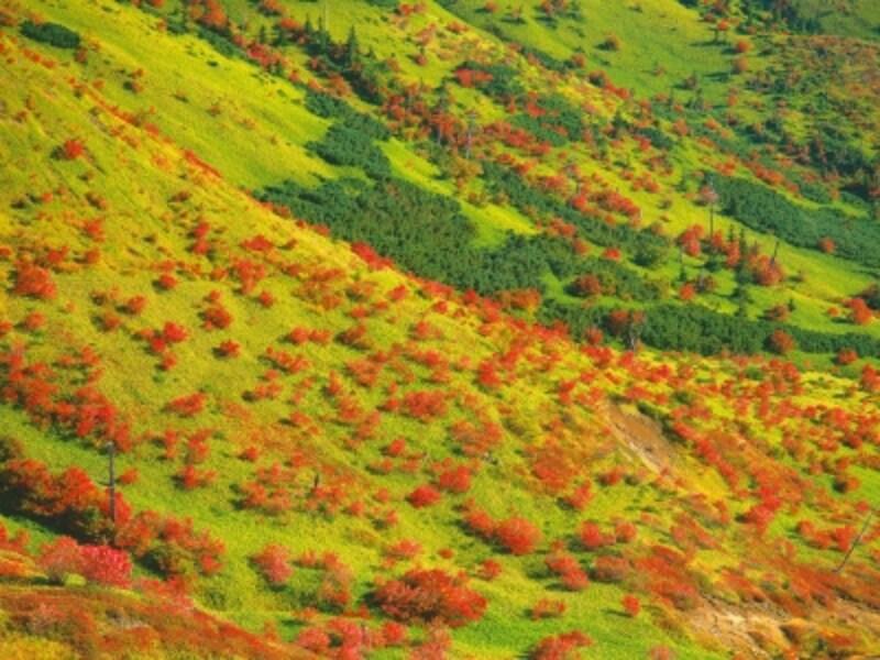 草津白根山の紅葉
