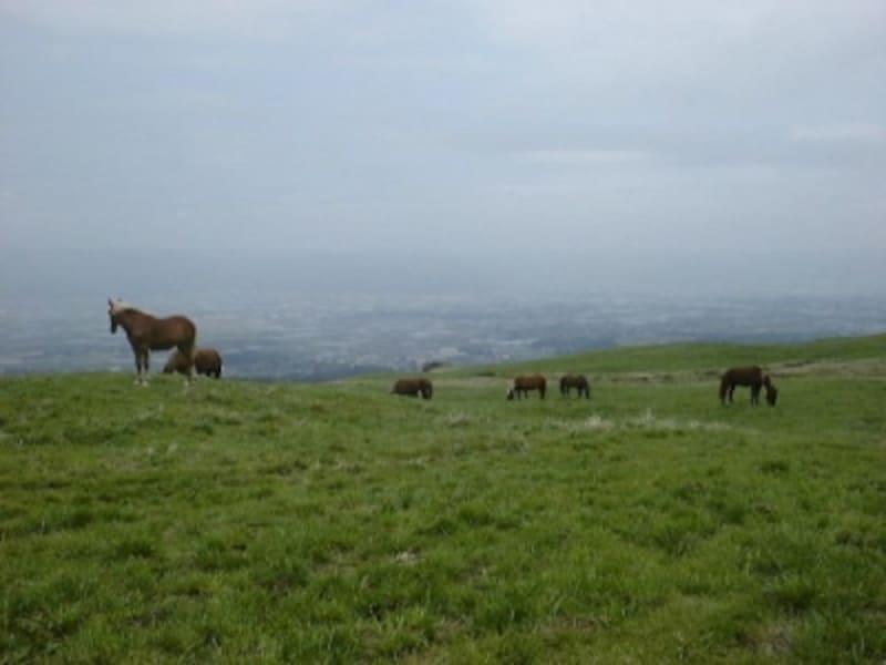 阿蘇・草千里にたたずむ馬たち