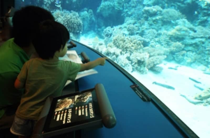 水族館での写真