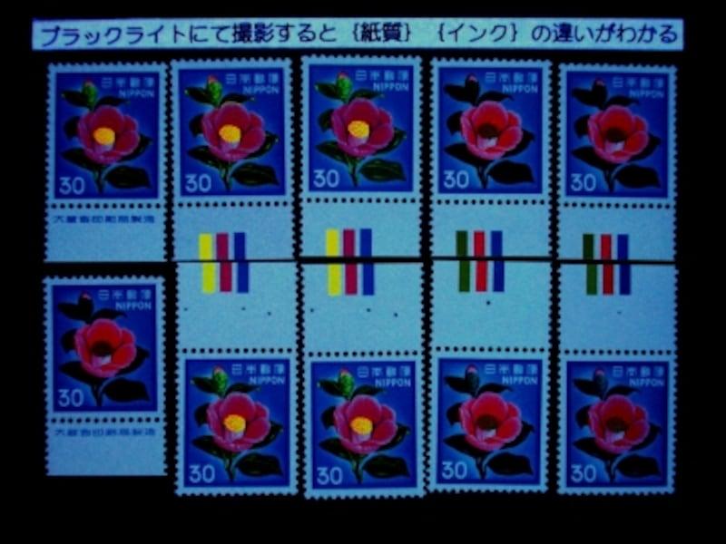 ツバキ30円