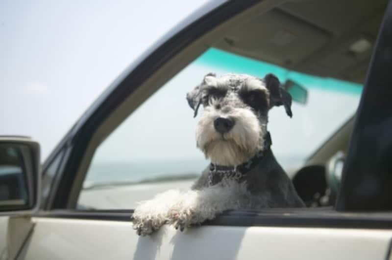 犬連れでドライブ