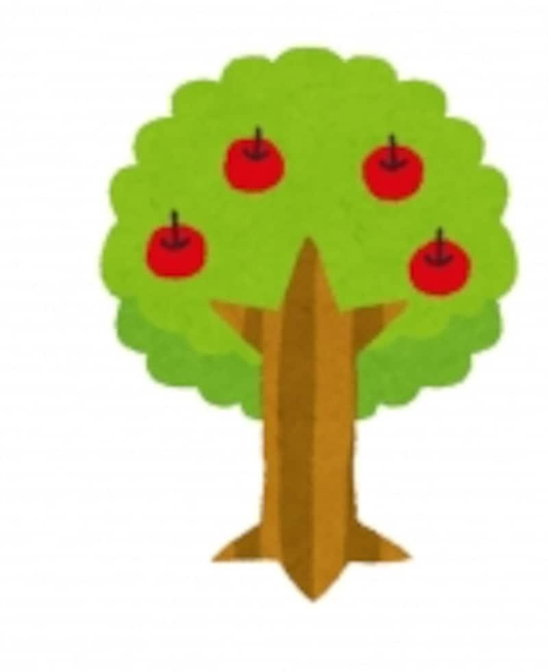 どんな木に成長するかは、根っこ次第。あなたは今、我が子の根っこを育てている最中です