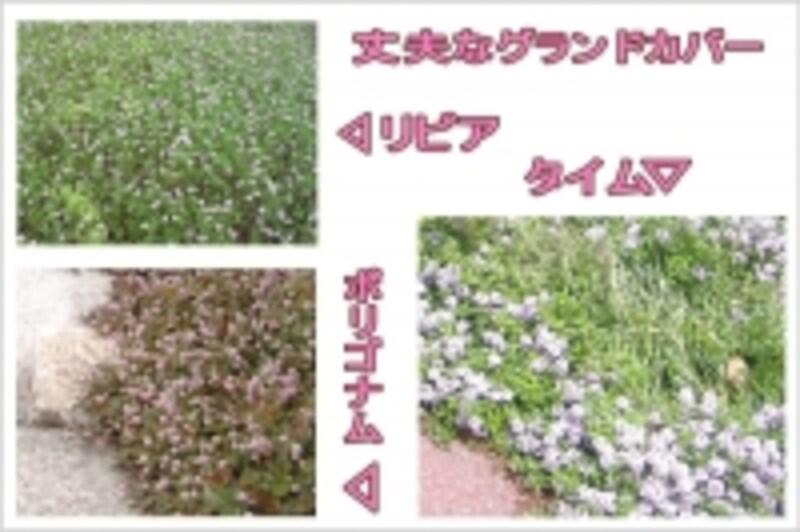 グリーンシームに最適の植物