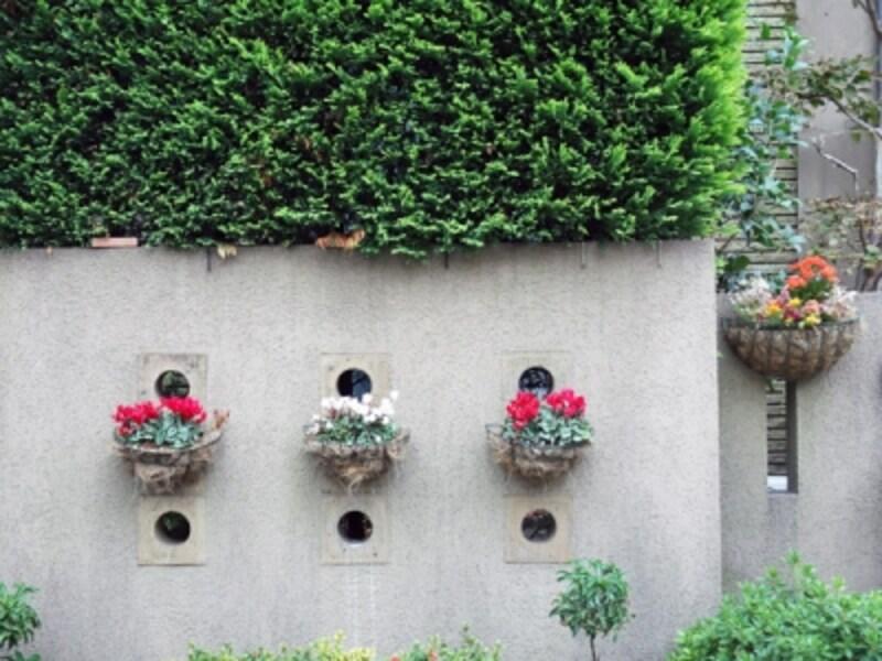 コンクリート塀に飾られた花