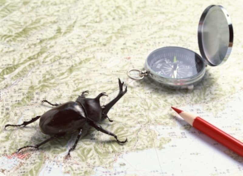 カブトムシが成虫になったらどうする?飼育方法Q&A