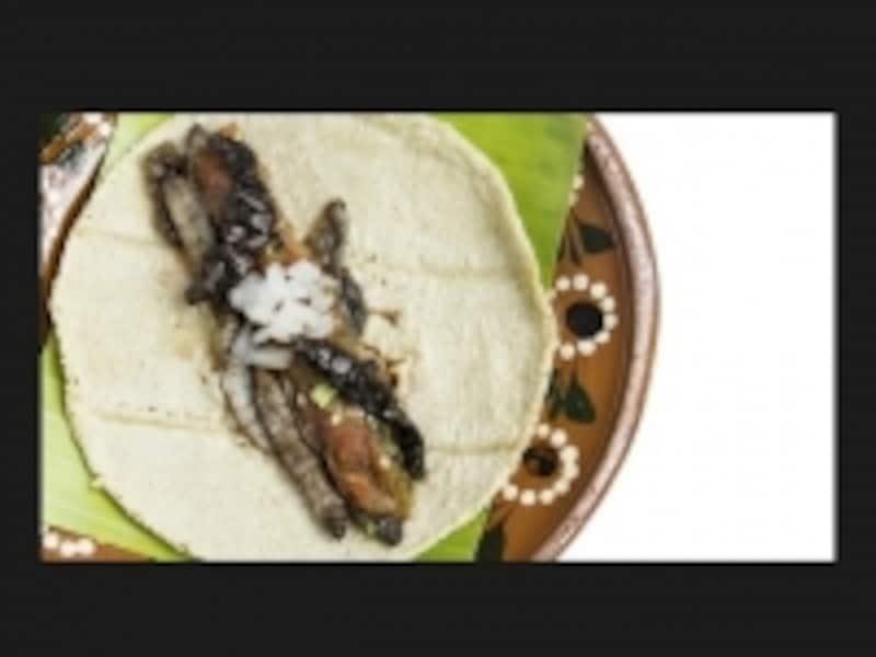 tacogusa