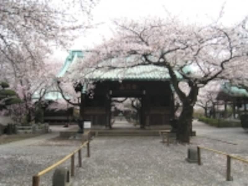 桜の時期の祐天寺