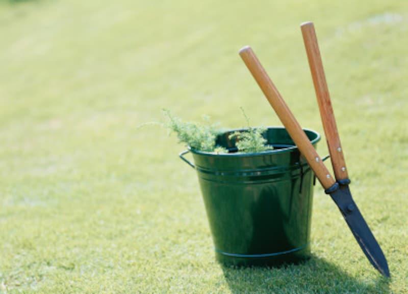 庭木の剪定をすることで、日照や通風もコントロールできる
