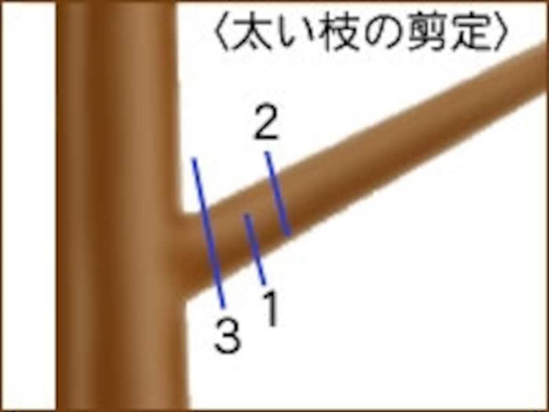 図1.太い枝は、図の番号順に切っていく