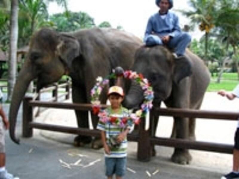象とのふれあい