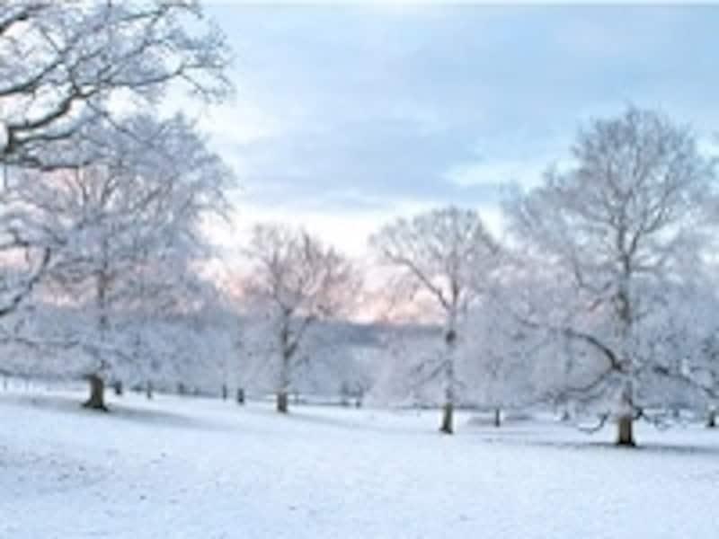 今年の冬も寒さが厳しそうです……