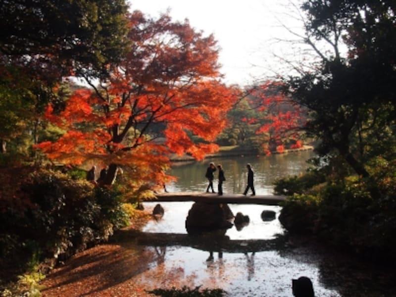 紅葉が実に美しい