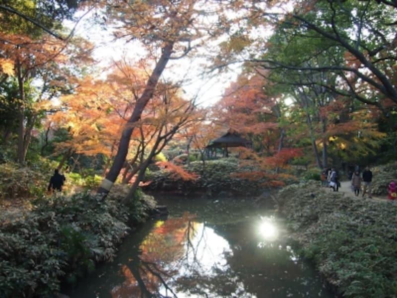 西日に照らされた紅葉が水に映る姿も美しい