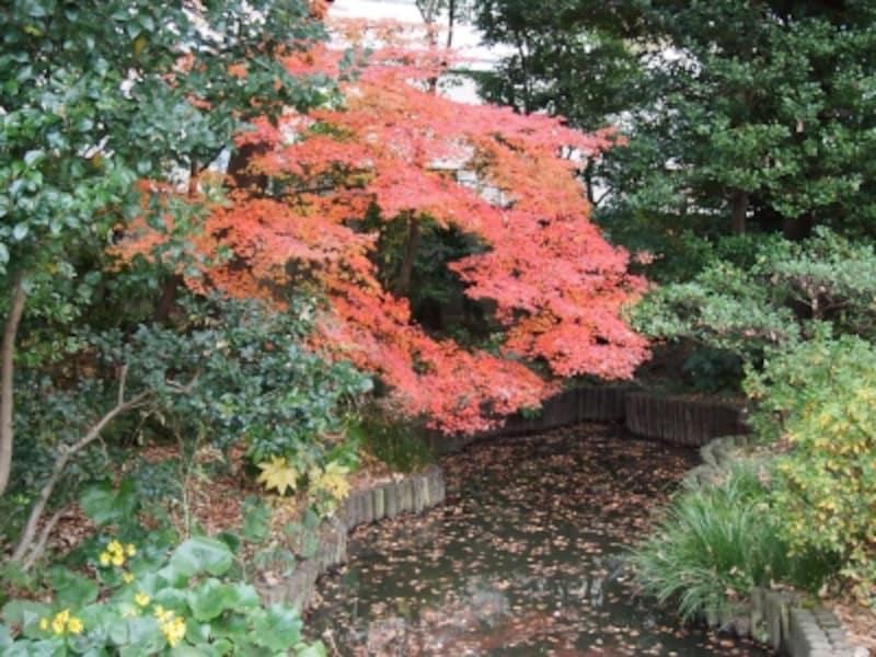 もう今年の紅葉も最後のほうだった。