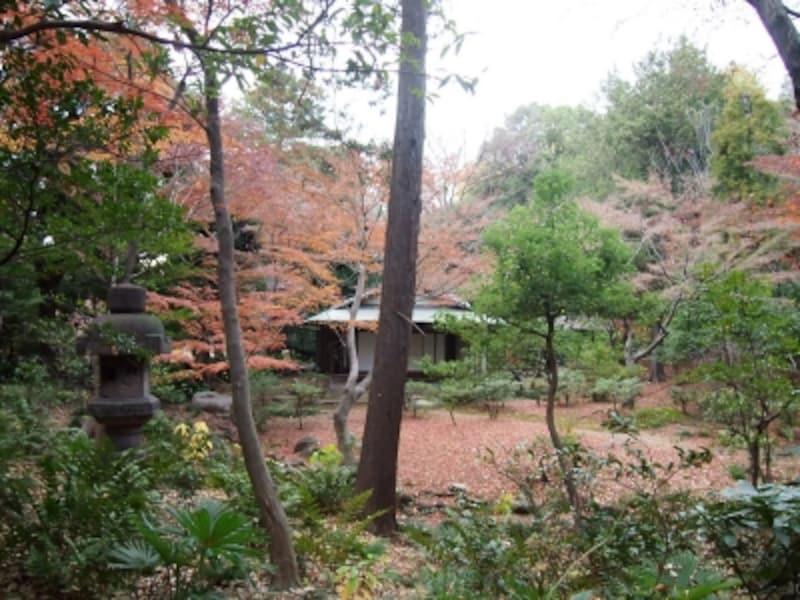 落ち着いた雰囲気の日本庭園の紅葉