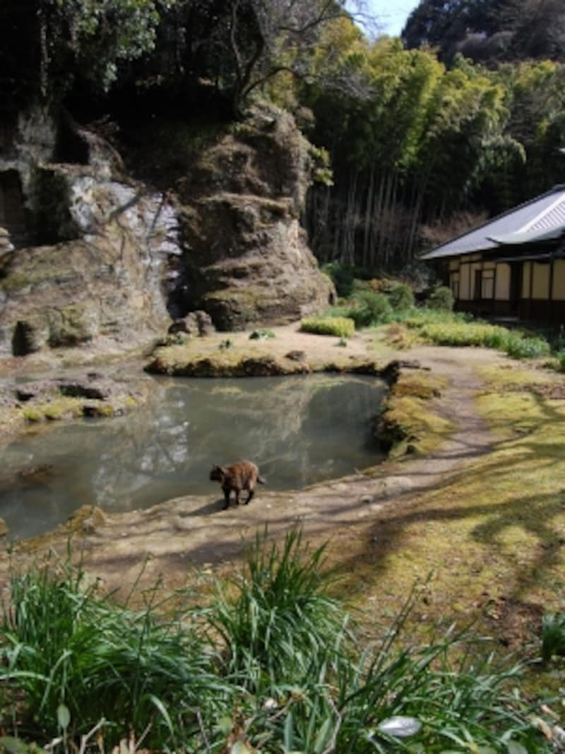 瑞泉寺の石庭と猫