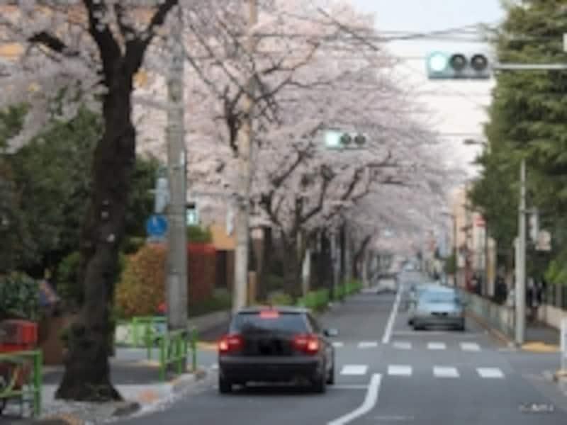 碑(いしぶみ)桜通り