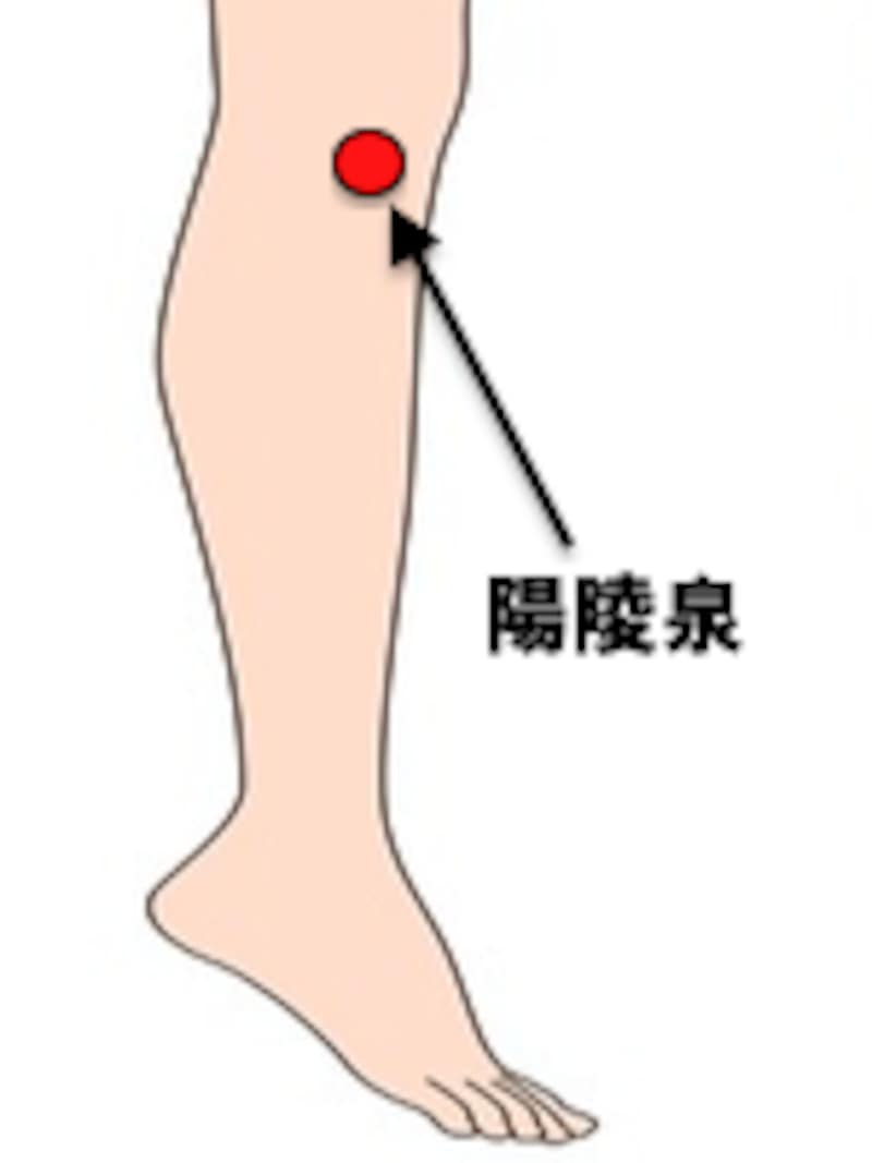胆の経絡に属する陽陵泉は肝の気の流れを回復させるといわれている