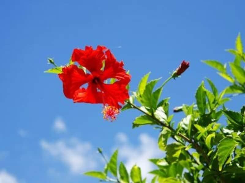 """いつ訪れても""""常夏""""を感じられるグアム。乾季は湿度も低く、カラリとした空が広がります"""
